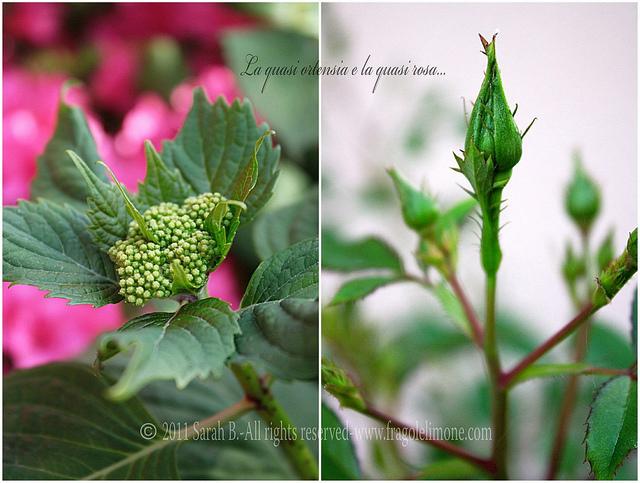 Collage fiori 4edited
